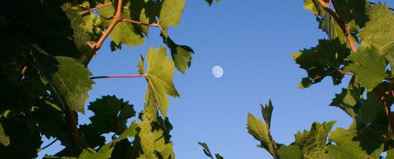 vin lune